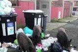 TRASTEVERE – Invasione dei rifiuti. Topi e cinghiali vicino ai cassonetti