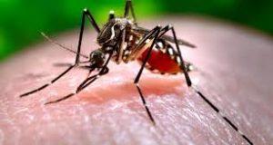 chikunguja