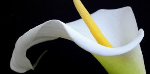 Lo scrigno di Irene: un romanzo che coinvolge e che scalda il cuore